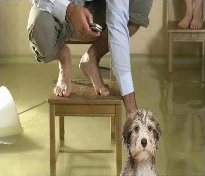 human on chair and dog standing in flooded water